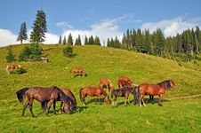 Free Horses On A Hillside Stock Photography - 15718792
