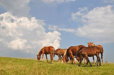 Free Horses On A Hillside. Royalty Free Stock Images - 15718929