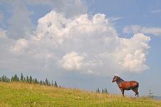 Free Horse On A Hillside. Royalty Free Stock Images - 15718939