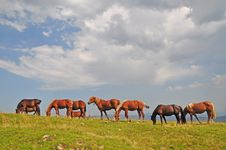 Free Horses On A Hillside. Royalty Free Stock Image - 15718946