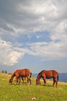 Free Horses On A Hillside. Stock Photos - 15718993