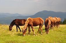 Free Horses On A Hillside Against A Distant Rain. Royalty Free Stock Photos - 15719018