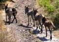 Free Donkeys Stock Image - 15721571