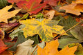 Free Background Image Of Fallen Autumn Leaves Stock Image - 15722101