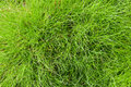 Free Grass Background Royalty Free Stock Image - 15725406