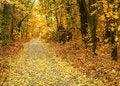 Free Autumn Park Road Stock Images - 15729764
