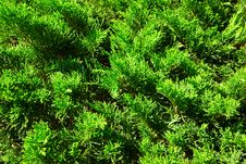Free Juicy Green Branches Stock Image - 15720161