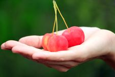Free Apples In A Palm Stock Photography - 15722902