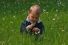 Free Boy And Cuckoo Flower Royalty Free Stock Photo - 15723225
