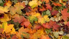 Free A Colorful Image Of Fallen Autumn Leaves Stock Photography - 15723612