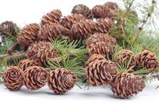 Pinecones Over White Stock Photos