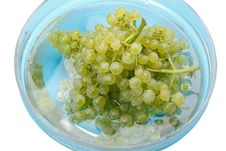 Free Grapes In Water Stock Images - 15728264