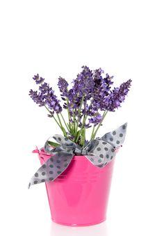 Purple Lavender Bouquet Stock Image