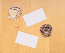 Two Blank Business Cards With Shells Stock Image