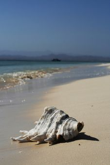 Free Shell On Beach. Royalty Free Stock Photos - 15729278