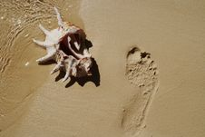 Free Shell On Sand Near Footprint. Royalty Free Stock Photo - 15729305
