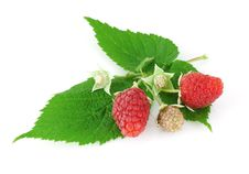 Free Raspberry Stock Photography - 15729762