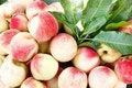 Free Fresh Juicy Peaches Royalty Free Stock Photos - 15732028