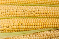 Free Raw Corn Royalty Free Stock Photos - 15736998