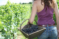 Free Beautiful Woman In Wine Rows Royalty Free Stock Photos - 15739708
