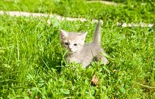 Free Little Kitten Stock Image - 15730931