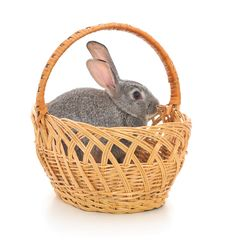 Little Rabbit In A Basket Royalty Free Stock Photo