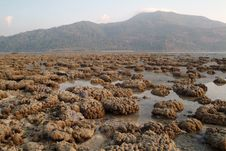 Free Coral In Andaman Sea. Stock Image - 15731111