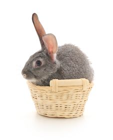 Little Rabbit In A Basket Royalty Free Stock Images