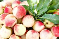 Free Fresh Juicy Peaches Royalty Free Stock Photos - 15732028