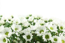 Free White Daisy Stock Photos - 15732993