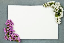 Free Greeting Card Royalty Free Stock Photography - 15733997