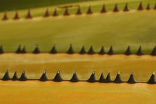 Free Palm Thorns Stock Image - 15736121