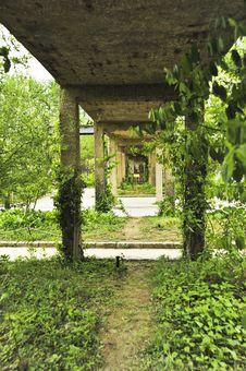 Vine Garden Stock Image