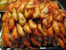 Lots Of Shrimps Royalty Free Stock Image