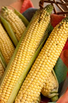 Raw Corn On The Cob Royalty Free Stock Images