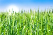 Free Green Field And Blue Sky Royalty Free Stock Photos - 15737328