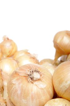 Free Onion Royalty Free Stock Photos - 15737858
