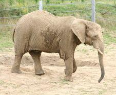 Free Elephant Royalty Free Stock Photography - 15738967