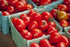Free Tomatoes Stock Images - 15739214