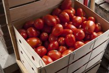 Free Tomatoes In Crate Royalty Free Stock Images - 15739219