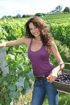 Free Beautiful Woman In Wine Rows Stock Photos - 15739763