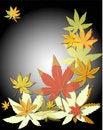 Free Autumn Leaves Royalty Free Stock Photo - 15740545