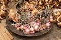 Free Onion Plate Royalty Free Stock Photo - 15747925