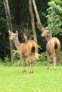 Free Deer Royalty Free Stock Photo - 15749545