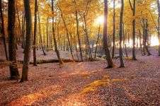 Free Autumn Scenery. Royalty Free Stock Photo - 15740495