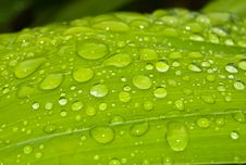 Free Waterdrops On Leaf Stock Photo - 15741980