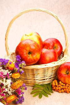 Free Apples, Berries And Flowers Stock Photography - 15742882