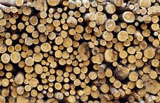 Free Wood Royalty Free Stock Photo - 15743235
