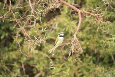 African Bird Stock Image