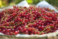 Free Red Currants Royalty Free Stock Image - 15743626